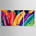 Stretched Canvas Art Still Life Colorful Feathers Set of 3