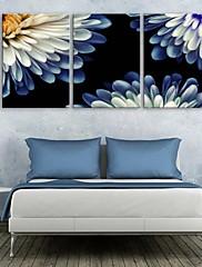 e-HOME® plátně umění chryzantéma dekorace malování set of 3
