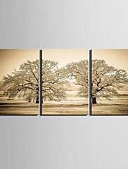 e-HOME® plátně umění strom dekorace malování set of 3