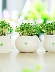 1 1 Podružnica Others Others Cvjeće za stol Umjetna Cvijeće