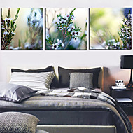 Stretched Canvas Print Botanical Floral Set of 3 1301-0148