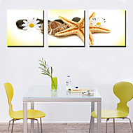Stretched Canvas Art Still Life Starfish and Shell Set of 3