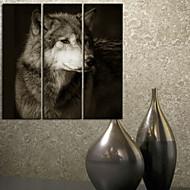 Sträckt Canvastryck Art Animal Wolf Set om 3