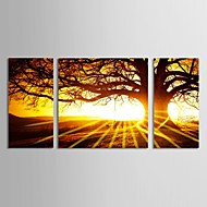 Canvas Set of 3 Landscape Big Tree in Sunset Stretched Canvas Print Ready to Hang