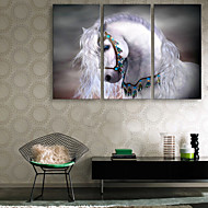E-HOME® Stretched Canvas Art The White Horse Decoration Painting  Set of 3