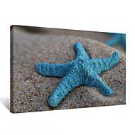 VISUAL STAR®Beach Blue Starfish Frameless Canvas Print Wall Art Picture Print Ready to Hang