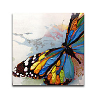 iarts®beautiful colorfl Messer Schmetterling Tierölgemälde gestreckt Designs whosale Preis Ende 2015