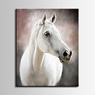 Animal / Fotografia / Realismo Impressão em tela Um Painel Pronto para pendurar , Vertical