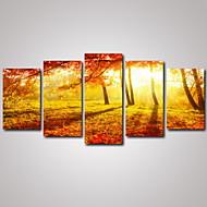Leisure / Landscape / Kasvitiede / Valokuvaus / Romantiikka / Matkailu Canvas Tulosta 5 paneeli Valmis Hang , Horizontal