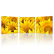 VISUAL STAR®Beautiful Yellow Sunflowers Landscape Modern Wall Decor Stretched Gallery Canvas Wrap Giclee Print