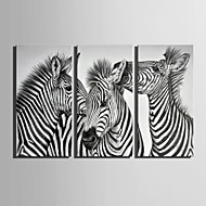 E-HOME® Stretched Canvas Art Three Zebra Decoration Painting  Set of 3