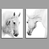 キャンバス地プリント / アンフレームキャンバスプリント 動物 Modern,2枚 キャンバス 縦長 版画 壁の装飾 For ホームデコレーション