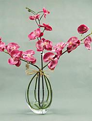 "20 ""H Phalaenopsis em esquema"