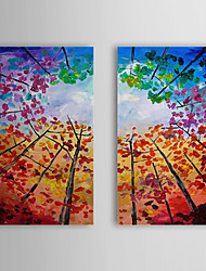 Hand Painted Oil Painting Floral with Stretched Frame Set of 2 1309-FL0886