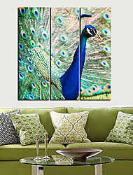 Stretched Canvas Art Animal Graceful Peacock Set of 3