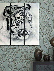 Stretched Canvas Art Animal Tiger Head Set of 3