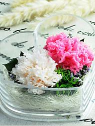 Jamais Faded Carnation en souvenir Acrylique coeur pour la Fête des Mères