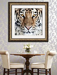 Enmarcado Tiger Canvas Print