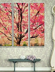 Flowers Full Branch Framed Canvas Print Set of  3