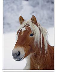 Классический лошадь в зимний ролика тени