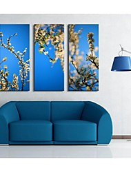 Personalized Canvas Print  Stretched Canvas Art White Flowers  30x 60cm   40x80cm  50x100cm Gallery Wrapped Art  Set of 3
