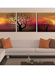 Personalized Canvas Print The Tree In The Sunset 30x30cm  40x40cm  60x60cm  Framed Canvas Painting Set of 3