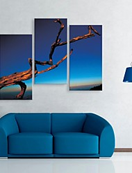 Stretched Canvas Art The Dead Branches Under The Sky Set of 3