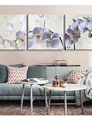 Personalized Canvas Print Phalaenopsis 30x30cm  40x40cm  60x60cm  Framed Canvas Painting Set of 3