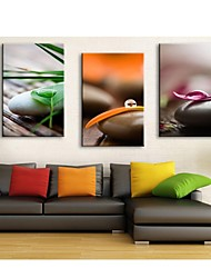 Personalized Canvas Print Stones And Leaves 35x50cm  40x60cm  50x70cm  Framed Canvas Painting Set of 3
