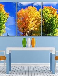 персональную электронную Home® холст печати осенние деревья 35x50cm 40x60cm 50x70cm оформлена холстины набор 3