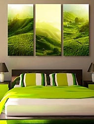 E-HOME® Stretched Canvas Art The Hillside Scenery Decoration Painting  Set of 3