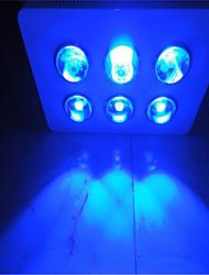 Led Grow Light 300 Leds Modern Blue White Iron Painting