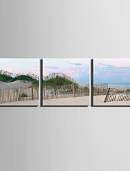 E-HOME® Stretched Canvas Art Seaside Beach Decorative Painting  Set of 3