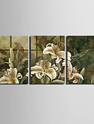 E-HOME® Stretched Canvas Art Lily Decorative Painting Set of 3