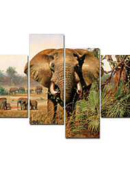 VISUAL STAR®African Animal Decor Wall Art Stretched Canvas Painting In High Quality