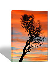 VISUAL STAR®Abstract Tree Stretched Canvas Painting High Quality Wall Art Ready to Hang