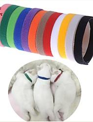 Chat / Chien Colliers Pour tous les jours Solide Multicouleur Nylon