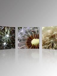 Пейзаж / ботанический / Фото / Модерн / Романтика Холст для печати 3 панели Готовы повесить , Квадратный