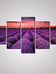 5 Panels  Purple Lavender Landscape  Picture Print on Canvas Unframed