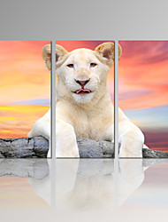 VISUAL STAR®Cute leopard 3 Panel Canvas Print Animal Wall Art for Home Decor Ready to Hang