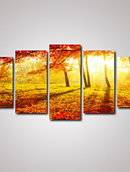 5 Panels Autumn Forest and Leaves Landscape Picture Print Wall Art on Canvas Unframed