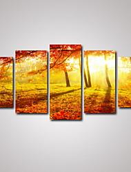 Фотографические отпечатки Холст для печати Пейзаж Отдых ботанический Фото Романтика Путешествия 5 панелей Горизонтальная Декор стены For