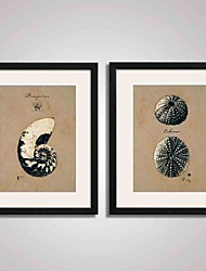 Framed  Seashells Picture Print for  Office Decoration 40x50cm Set of 2 Ready To Hang