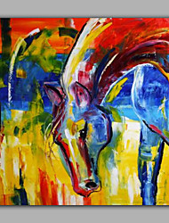 Animal Oil Paintings with Nice Colorful Horse Head