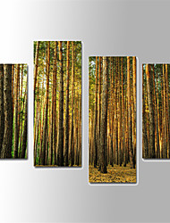 U2art®Landscape Canvas Print Tree Scenery 4 Panels Vertical For Living Room With Cotton Drawing(No Frame)