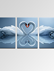 VISUAL STAR®Modern Swan Love Canvas Print Wall Art for Home Decor Ready to Hang