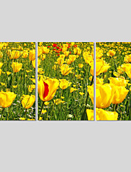 Canvas Print Art Set Of 5 Wall Pictures For Linving Room Modern Golden Flower Pictures Home Decor