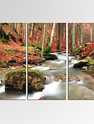 VISUAL STAR®Framed Autumn Forest Wall Art for Home Decoration Landscape Giclee Print on Canvas Ready to Hang