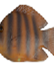 The Small Striped Fish