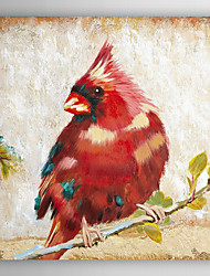 Hand Painted Oil Painting Animal Red Cardinal with Stretched Frame